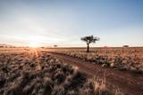 Sunrise Desert Track