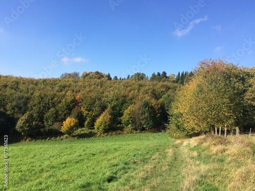 Foto op Plexiglas Pistache Wiese am Waldrand im Herbst
