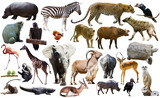 Birds, mammal and other animals of Africa isolated - 177368672
