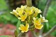 flower wallpaper - 177383442
