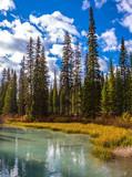 Coniferous forest - 177392209