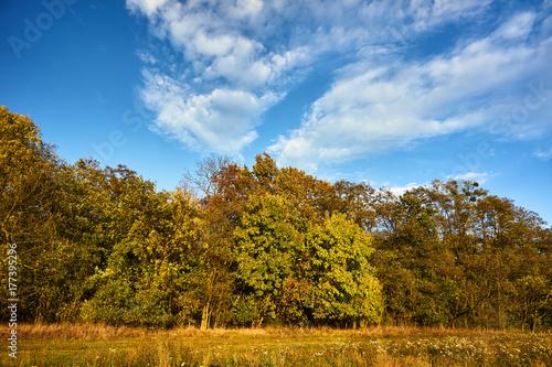 Papiers peints Bosquet de bouleaux Meadow and birch grove in autumn .