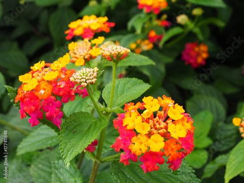 Fridge magnet flores