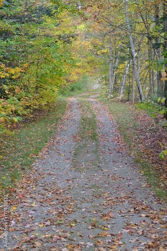 Papiers peints Route dans la forêt trail