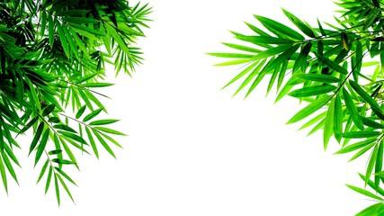 green bamboo leaves isolated on white background © sema_srinouljan