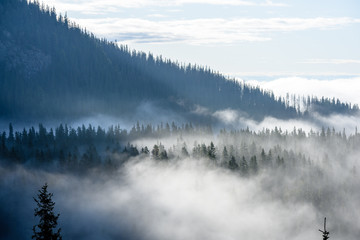 panoramic view of of mountains in misty forest