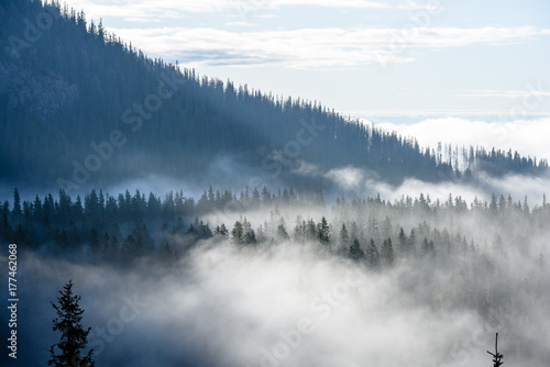 Fotobehang Wit panoramic view of of mountains in misty forest