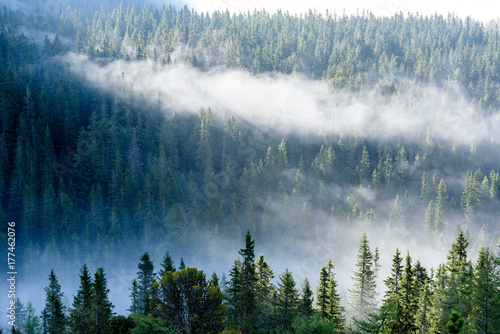 panoramic view of of mountains in misty forest - 177462076
