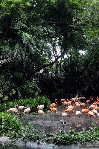 pink flamingos and asia jungle Poster
