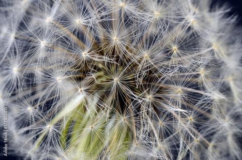 Aluminium Paardebloemen Dandelion seeds macro flower