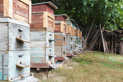 colored wooden beehives - honey bees flying around wooden beehives Plakat