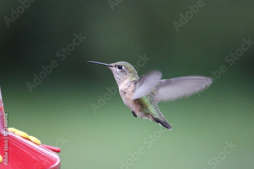 Hummingbird Feeding Series