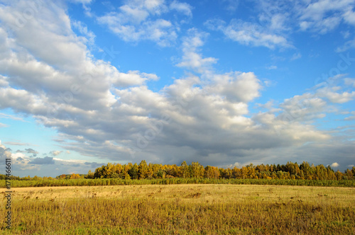 Fotobehang Berkenbos Country landscape with yellow meadow in autumn