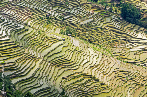 Aluminium Rijstvelden Yuanyang Rice Terraces, Yunnan - China. Terraced rice fields of Hani ethnic people in Yunnan province, China.