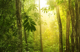 Tropical green forest with sunray