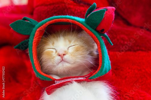 Cute little cats wearing a strawberry hat and sleeping in the bedroom on a red wool blanket Poster