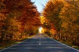 Droga w lesie w barwach jesieni