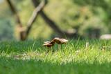 Mushroom - 177541407