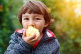 Kleiner Junge Kind Apfel Obst Früchte essen draußen Herbst Natur gesunde Ernährung - 177543226