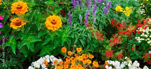 Fotobehang Groene bright garden flowers