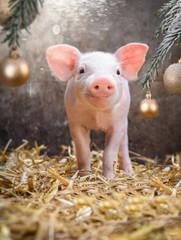 Weihnachten im Schweinestall, rosa Ferkel unterm Christbaum