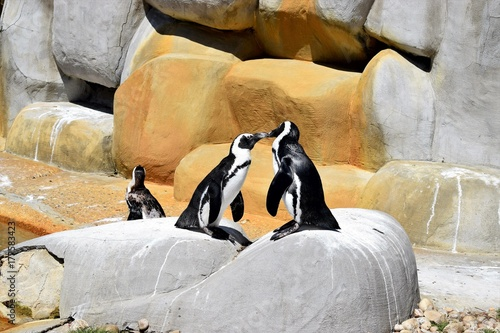 Aluminium Pinguin African Penguins Kissing