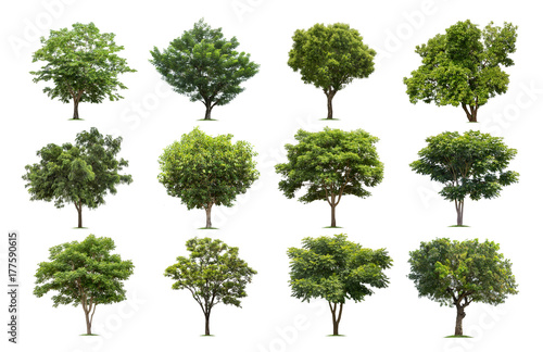 Collection of trees isolated on white background high resolution for graphic decoration, suitable for both web and print media - 177590615