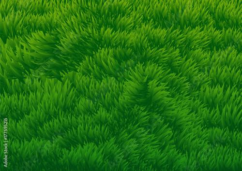 Fotobehang Groene Grassy Field background-Vector Illustration