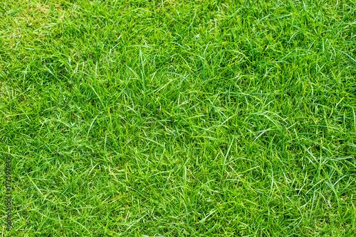 Papiers peints Vert Green grass field texture