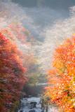 Nagoya, Obara Sakura in autumn - 177610200