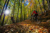 Cycling, mountain bikeing woman on cycle trail in autumn forest. Mountain biking in autumn landscape forest. Woman cycling MTB flow uphill trail. - 177619273