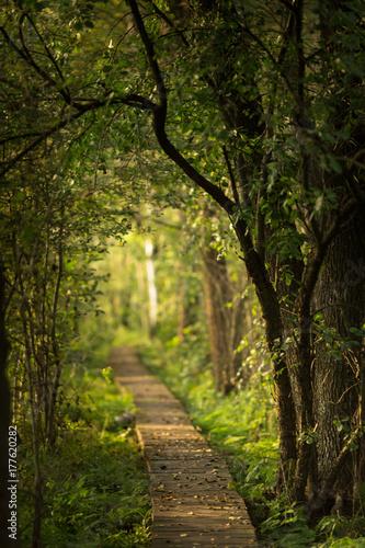 Staande foto Weg in bos polesie