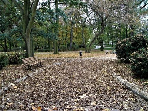 Papiers peints Route dans la forêt park jesień ławka