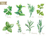 Culinary herbs collection watercolor illustration with clipping paths - 177635676
