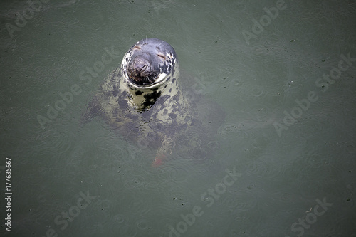 seal, Poster