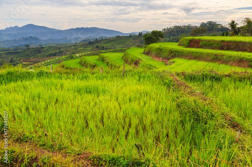 Foto op Plexiglas Rijstvelden Beautiful green rice terraces on a cloudy day