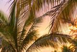 Sunset On Beach Palm Fronds - 177660401