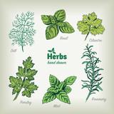 Culinary herbs vector hand drawn illustration - 177669847