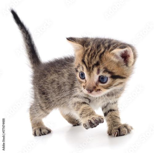 Kitten on white background. Poster