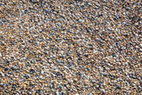 seashells on the sandy beach of the sea - 177687222