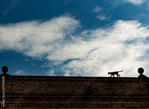 Silhouette Cat Over the Roof Poster