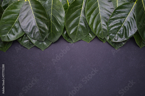 Poster Dark green color of the jackfruit tree leaves on black stone background
