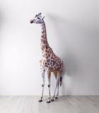 the giraffe in the white room - 177713482