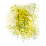 Golden shower flower (Cassia fistula). Watercolor painting (retouch). - 177716830