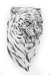 Sketch of the head of a tiger on a white background.