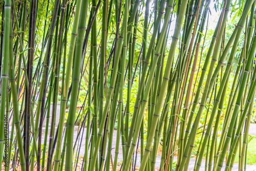 Foto op Canvas Zen Green bamboos background