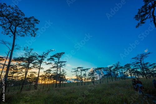 Aluminium Blauwe jeans Pine forest in Thailand