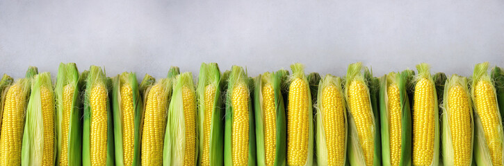 Fresh corn on cobs on light grey concrete background, closeup, top view, copy space. Banner © jchizhe