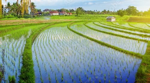 Papiers peints Bali traditional Bali rice field panorama