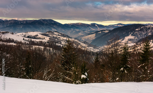 Papiers peints Lavende forest on snowy hills in mountains at dawn. gorgeous winter landscape with high mountain ridge in the distance